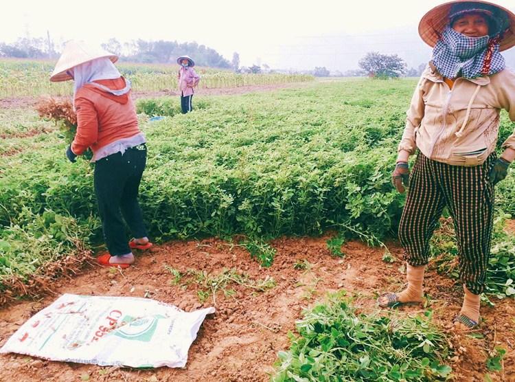 Kiều Bảo Hân dự án Hapinut